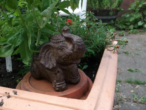 The elephant in my backyard