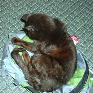 Mike occupying the backpack, possibly hoping to come along to work.